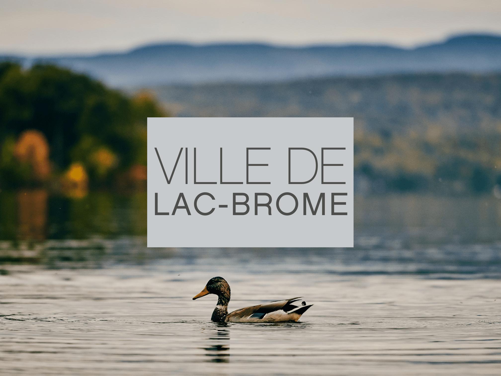 Vue sur le lac Brome et sur un canard qui patauge
